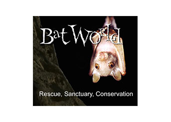 September Partner Spotlight: Bat World Sanctuary